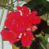 Цветок Джунглей